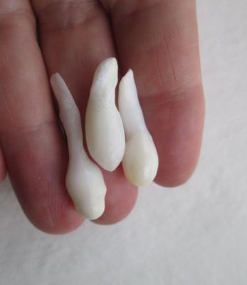 Three Drop Shaped Natural Clam Pearls 25+ carats for Sale
