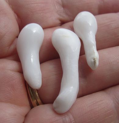 Three Large Wonderful Clam Pearl Drops 43+ carats 26 - 42mm
