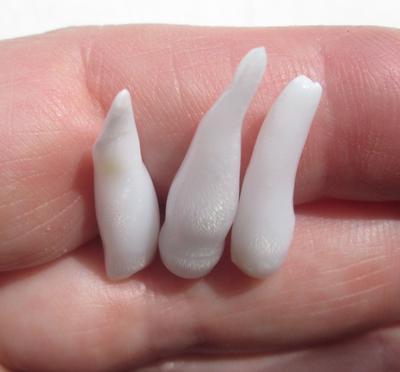 Three Long Drop Shaped Natural Clam Pearls 17 carats Total