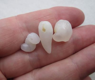 Three Translucent Natural Clam Pearls 23+ carats Total for Sale