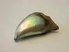 145.63 carat natural Abalone Pearl