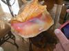 39 Carats Baroque Puerto Rico Pink Conch Pearl