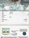 Certificate - Natural Basra Pearl Earrings Light Cream on 18k Gold
