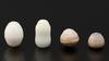Thorny Oyster (Spondylus) Pearls