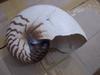 Very Rare Nautilus Blister Pearl