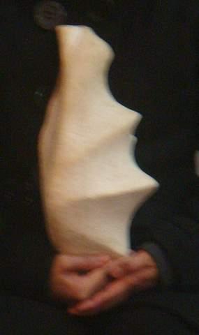 Tridacna Gigas Object