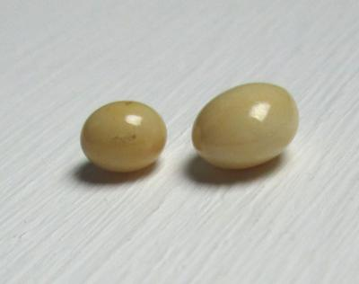 Two Beige Conch Pearls