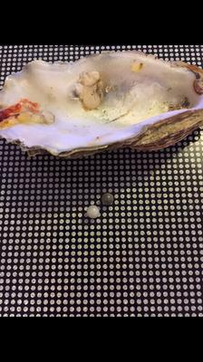 Two pearls found in one oyster