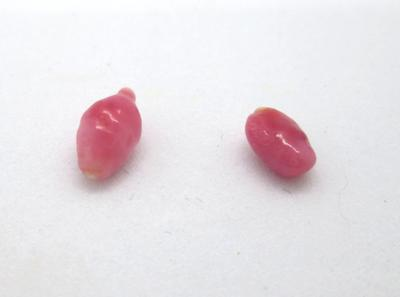 Two Reddish Conch Pearls 1.4ct total