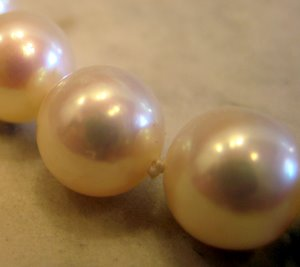 White Freshwater Pearls Closeup