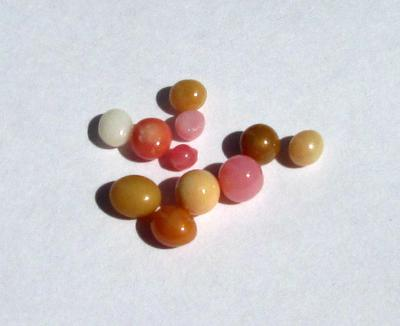 11 Conch Pearls Various Colors 3+ carats - Total