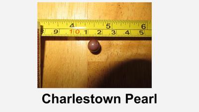 Charlestown quahog pearl
