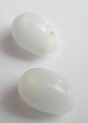 2 Clam Pearls with Flame for Sale 11mm