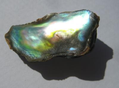 13.85 carats Abalone Pearl