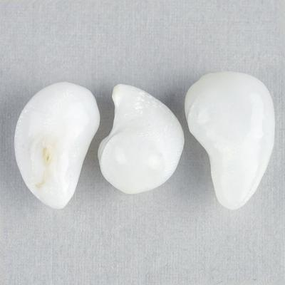 3 Matching Curved Clam Pearls - 20 Carats Total