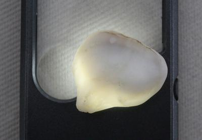65 carat Clam Pearl