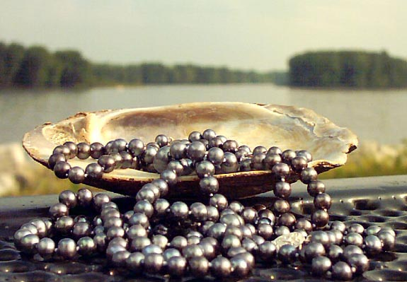 black freshwater pearls overflowing from shell by Mississippi River