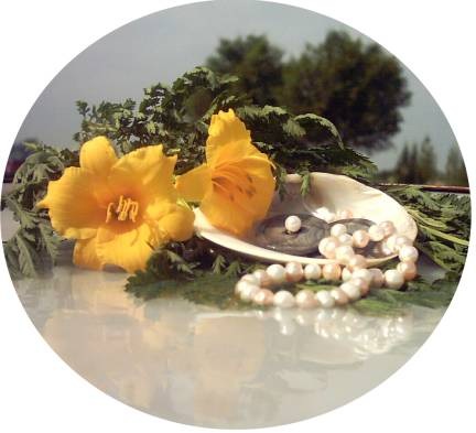 daylily with pearls on shell