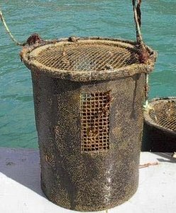 Abalone farming barrel