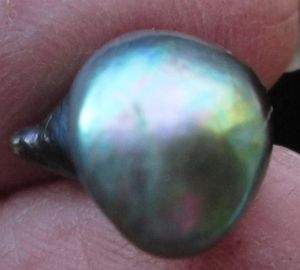 Abalone Pearl High Iridescence 15mm 7+ carats