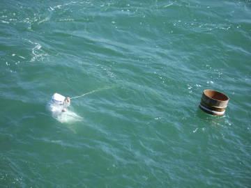 Ama Pearl Diver in Water (photo by Kari)