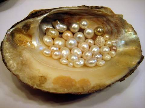 Freshwater Clam with Natural Freshwater Pearls