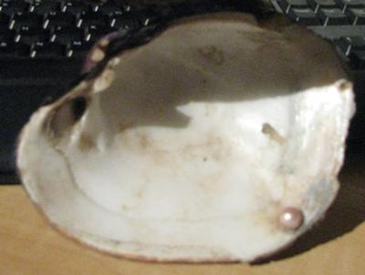 Blister Pearl from Michigan