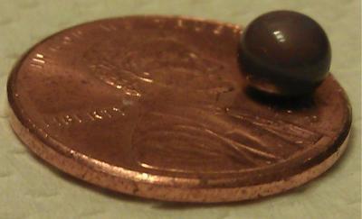 Natural quahog pearl