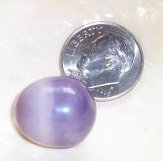 17mm Purple Quahog Pearl