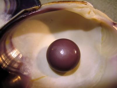 Close up large quahog pearl