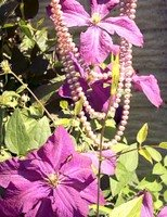 pearls and clematis