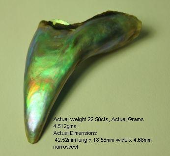 Natural Abalone Pearl