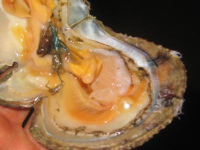 Natural Arabian Gulf Pearl