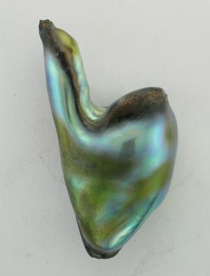 Natural abalone pearl 1st polishing