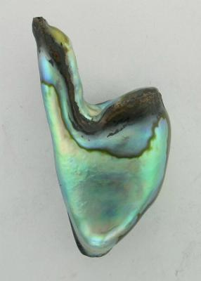 Partially polished abalone pearl