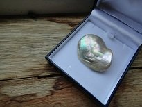 Abalone Pearl 87.5 carats