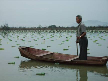 pearl farm boat