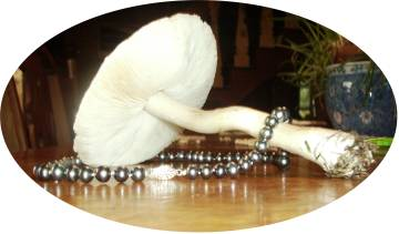 Photographs of pearl necklace