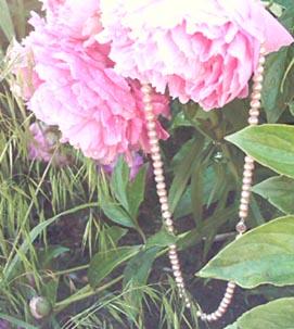 pink pearls on peonies