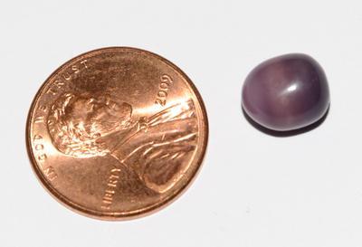 Quahog Pearl found in Little Neck Clam