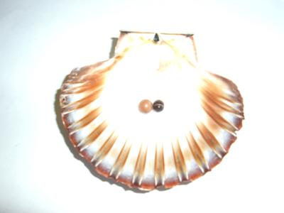 Scallop pearls from Tasmania