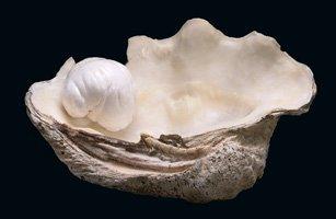 5 Pound Pearl