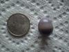 11.9 carat quahog pearl